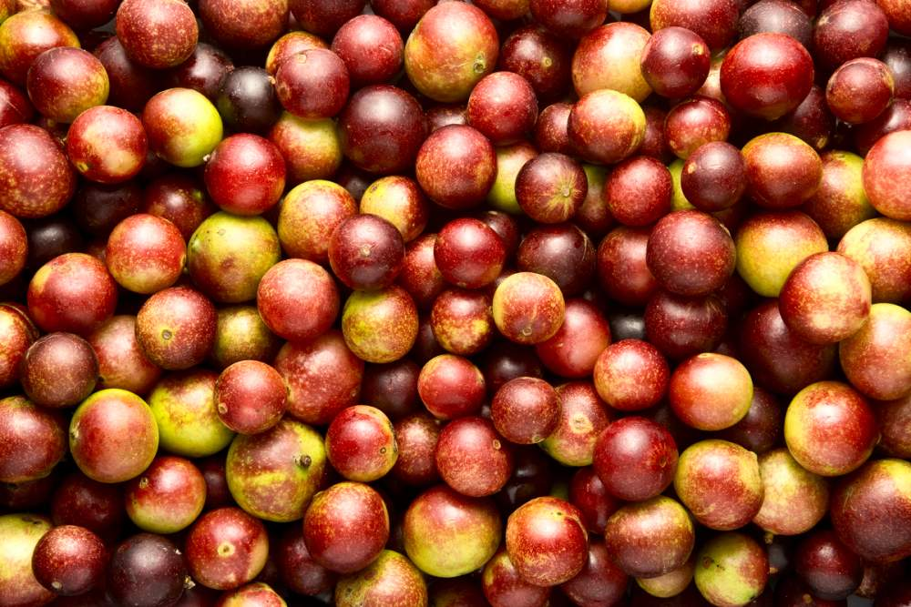 benefits of camu camu